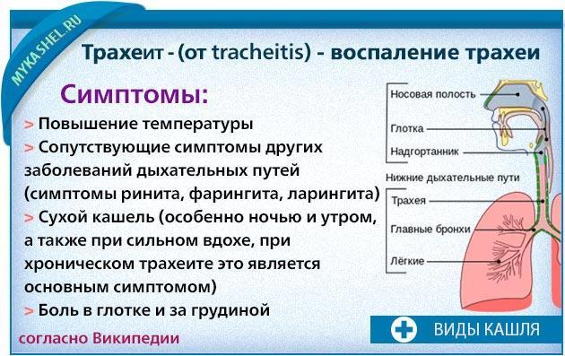 Трахеит без кашля симптомы и лечение