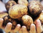 Компресс из картошки от кашля: как его сделать правильно ребенку и взрослому, схема расположения