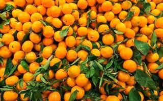 Мандарины при кашле, рецепты приготовления мандариновых корок