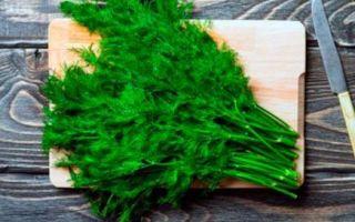 Укроп при кашле: лечебные свойства и рецепты приготовления