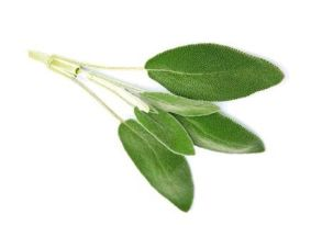 Шалфей от кашля — полоскание, ингаляции и напитки