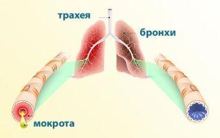 Прозрачная или белая мокрота при кашле у взрослых и детей