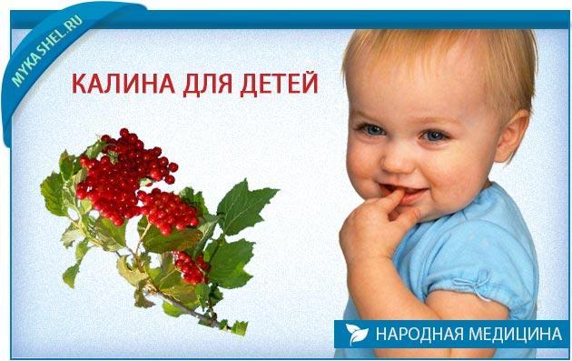 калина для детей