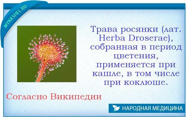 росянка от кашля
