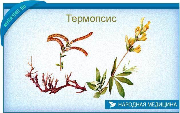 термопсис ланцентевый