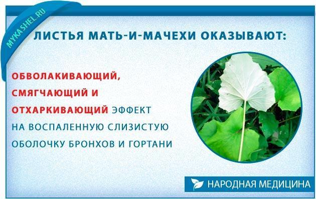листья мать и мачехи при кашле