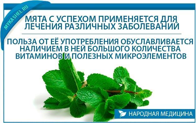 Мята с успехом применяется для лечения различных заболеваний